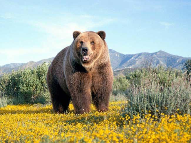 Самые большие животные в мире